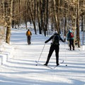 Skate skiing and classic skiing along Trail 1 in Gatineau Park.- Gatineau Park Cross Country Skiing