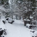 The snow-covered path is easy to follow in most places.- Manzanita Lake Loop Trail