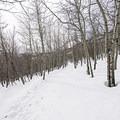 Many large apsen groves line the trail.- Stewart Falls + Honeymoon Meadow Snowshoe