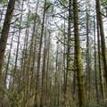 Ridgeline Trail in the Willamette Valley.- Ridgeline Trail System: Fox Hollow Trailhead