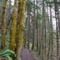 Ridgeline Trail in the Willamette Valley.- Ridgeline Trail System: Martin Street Trailhead to Fox Hollow Trailhead
