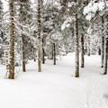 A thin layer of fresh snow on top of 5 feet of crust.- Three Summits Loop