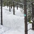Undulating ski tracks through the woods.- Tumalo Falls Nordic Loop via Skyliner Sno-Park