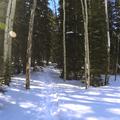 Headed into the woods.- Hahns Peak Lake Area
