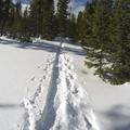 Following the tracks through the snow.- Hahns Peak Lake Area