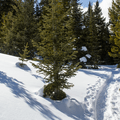 Tracks in the snow.- Hahns Peak Lake Area