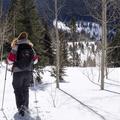 Breaking trail through the aspens.- Hahns Peak Lake Area