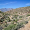 Winding trails on a mellower grade mark the second portion of the loop.- Las Vegas Overlook Trail
