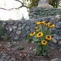 Flowers bloom at Petersen Rock Garden from spring to fall.- Petersen Rock Garden