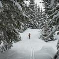 The playfully rolling Pine Martin Trail.- Sasquatch Ski Trail