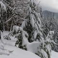 One of the few viewpoints on the upper loop.- Sasquatch Ski Trail