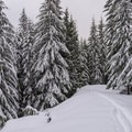 Close to the top of the upper loop.- Sasquatch Ski Trail