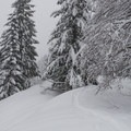Close to the upper loop junction.- Sasquatch Ski Trail