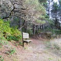 A bench to rest and enjoy the view of the Oregon Coast.- Chief Tsiltcoos Trail