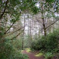 Chief Tsiltcoos Trail in the Oregon Dunes National Recreation Area.- Chief Tsiltcoos Trail