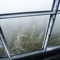 Looking down through the fog from the fire tower.- Elmore Mountain Fire Tower