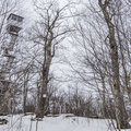 View of the fire tower.- Mount Tremper