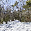 The path passes hemlocks and pitch pine.- Skytop Tower Trail