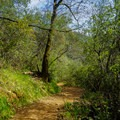 The trail continuously weaves around the river bend.- Canyon Creek Trail To The Black Hole of Calcutta Falls