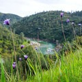 Purple wildflowers cover the hillside along the river.- Canyon Creek Trail To The Black Hole of Calcutta Falls