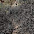 The final stretch to the spring can be overgrown and may take some searching to find a way through.- Oak Creek Canyon Trail