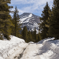 Looking up the road toward Mount Guyot.- French Gulch