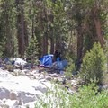 This backpacker hung up his food, and the bear made short work of it.- Little Lakes Valley