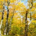 The trail to Oberg Mountain.- Oberg Mountain