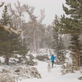 Weaving through the wind-warped trees as the route approaches the lake.- St. Mary's Glacier