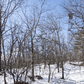 Sighting the summit and fire tower.- Stissing Fire Tower