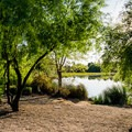 The Water Ranch Riparian Area.- Riparian Preserve at Water Ranch