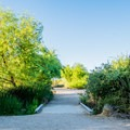 Walking trails at the Water Ranch Riparian Area.- Riparian Preserve at Water Ranch