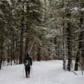 In winter, hiking the Bigelows requires walking on the Stratton Pond Road.- The Bigelows + Horns Loop