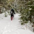 Bigelow Trail at lower elevation.- The Bigelows + Horns Loop