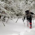 Ascending the Bigelows in fresh snow.- The Bigelows + Horns Loop