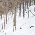 The woods are relatively tight, but they still ski well.- Michigan Valley