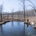 Headwaters of the Wappingers Creek.- Thompson Pond Nature Preserve