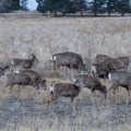 You are bound to see many deer at Rocky Mountain Arsenal National Wildlife Refuge.- Rocky Mountain Arsenal National Wildlife Refuge