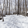 Old stone walls line this former carriageway.- Franny Reese State Park