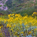 Yellow monolopia during a super bloom Walker Canyon Ecological Reserve.- Walker Canyon Ecological Reserve