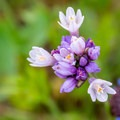 Unidentified species (help us identify it by providing feedback).- Walker Canyon Ecological Reserve
