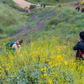 Plenty of visitors enjoy the super bloom in Walker Canyon Ecological Reserve.- Walker Canyon Ecological Reserve