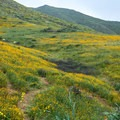 A super bloom in Walker Canyon Ecological Reserve.- Walker Canyon Ecological Reserve