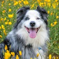 Walker Canyon Ecological Reserve is dog friendly.- Walker Canyon Ecological Reserve