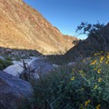 A look back at the Palm Canyon Trail while ascending the alternate trail for the full loop.- Borrego Palm Canyon