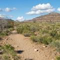 The Rings Loop Trail flattens out as it loops back.- Rings Loop Trail