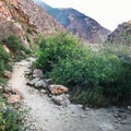 You'll begin to see the hidden oasis around marker 12.- Borrego Palm Canyon