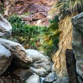 There are plentiful swimming holes to cool off in!- Borrego Palm Canyon