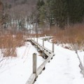 The boardwalk covered in snow.- Thundering Brook Falls