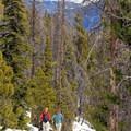 Descending Mount Royal through the forest. - Mount Royal